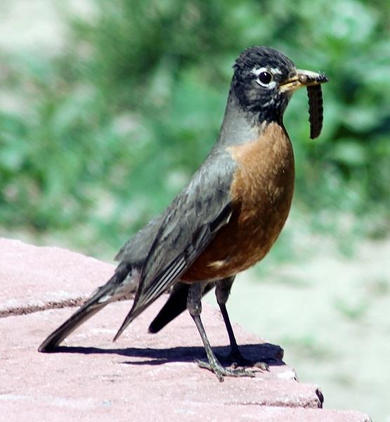 Backyard Birding by GeneWheeler