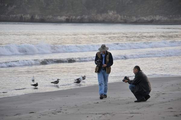 Birds watching photographers 222